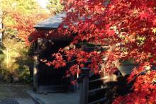 秋の石巻・川の上